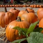 Caregivers in Summerlin NV: 7 Reasons Why Pumpkin is Healthy for Seniors